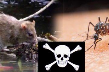 RD registra 18 muertes por leptospirosis y 7 por dengue en lo que va de año