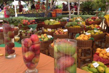 Exportación de mango de RD alcanzó 20 millones de dólares en 2017