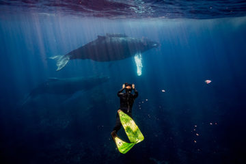 "Más de 20 millones de espectadores viven experiencia de las ballenas jorobadas en ""GoodMorning América"""
