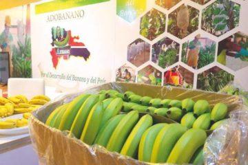 Sector banano desarrolla capacidad exportadora
