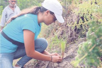 Grupo Popular siembra más de 50,000 árboles