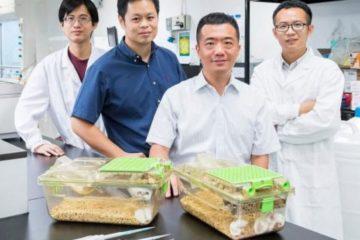 Científicos hongkoneses desarrollan nuevo compuesto que reduce tamaño tumores